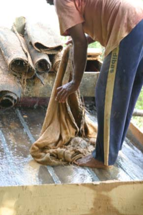 Cleaning the mats of the sluicebox. Mercury is placed on the excavated material in the sluicebox. Tapapajós, Brazil 2004. Photograph by A. Mathis.
